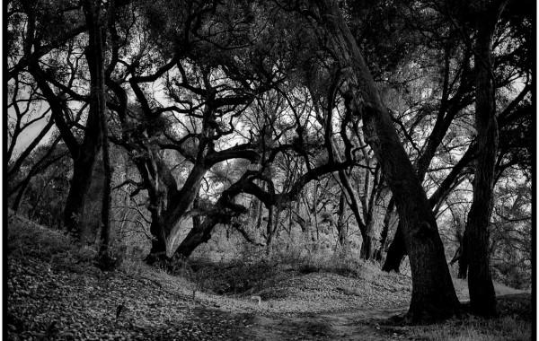 Ghost Stories - Latino USA